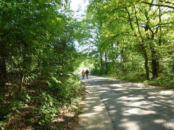 Brasserie in natuurlijke, bosrijke omgeving Noord-Limburg